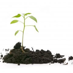 green plant in soil on a white background